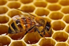 أماكن بيع العسل الأبيض