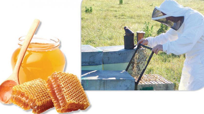 6 فوائد تدفعك لاستخدام العسل لعلاج ارتفاع الكرياتين مدينة الرياض